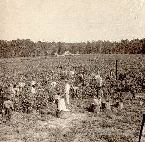 the history of the large agrarian country Story of farming lf3000 over 80 percent of mankind's diet is provided by the seeds of less than a dozen plant species (26f, pg 2) over the years man has invented new machines and techniques to increase the amount and variety of crop production.