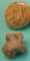 Poverty Point Objects (cooking balls), with die for scale.