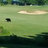 Bear sighting at the 18 hole fairway