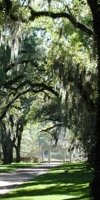An alley of live oaks makes for an impressive entrance way to Rosedown Plantation in St. Francisville, Louisiana. Photo from Louisiana State Parks.