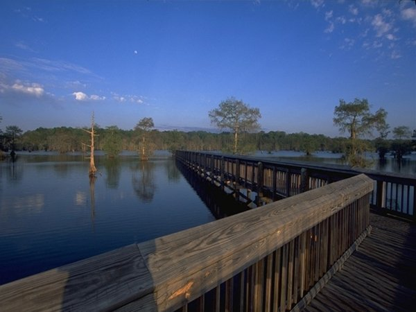 Chicot state park louisiana office of state parks for Fishing cabins in louisiana
