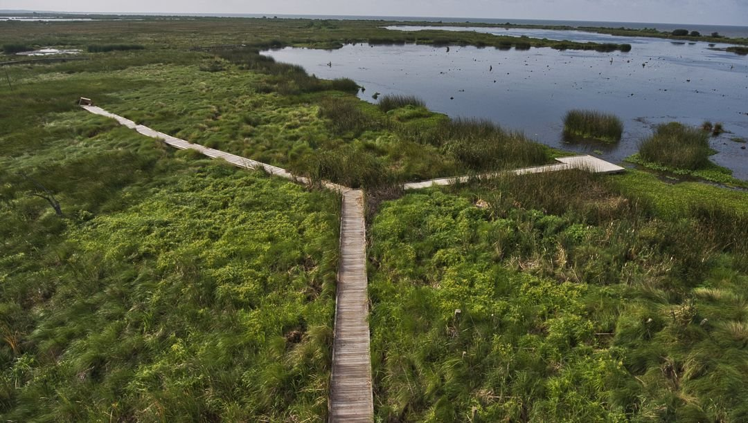 Marshland boardwalk