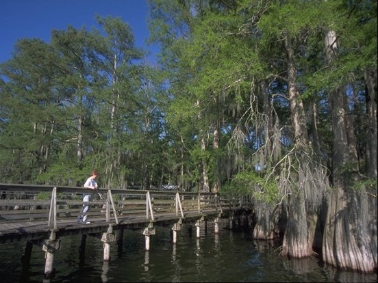 Toyota Of New Orleans >> Lake Bruin State Park | Louisiana Office of State Parks